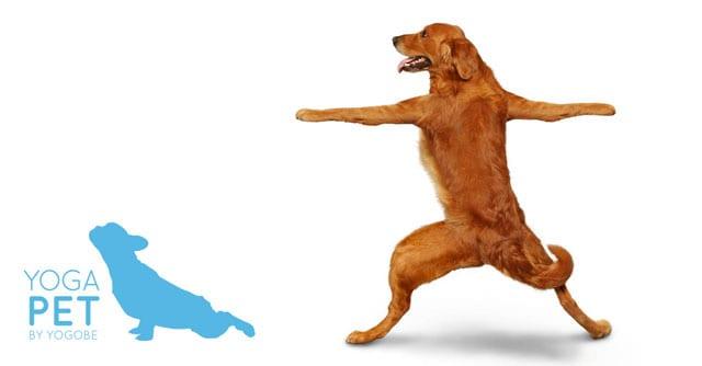 Yoga med din hund, katt eller häst